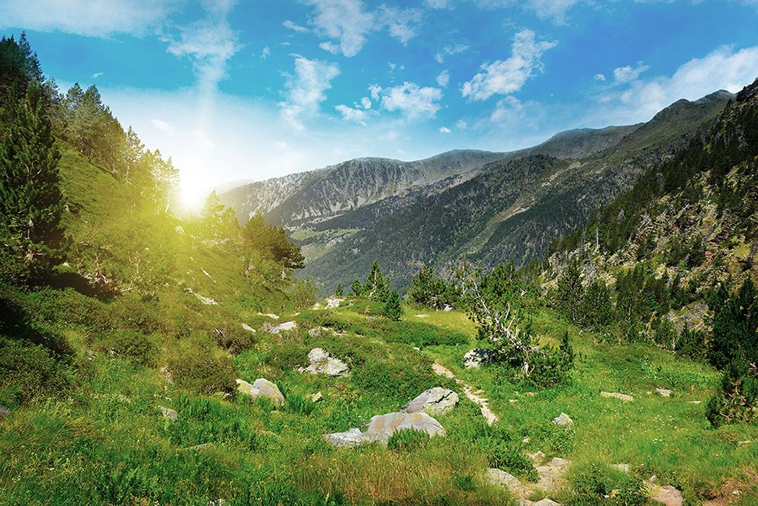 natura cilma bosc sostenibilitat
